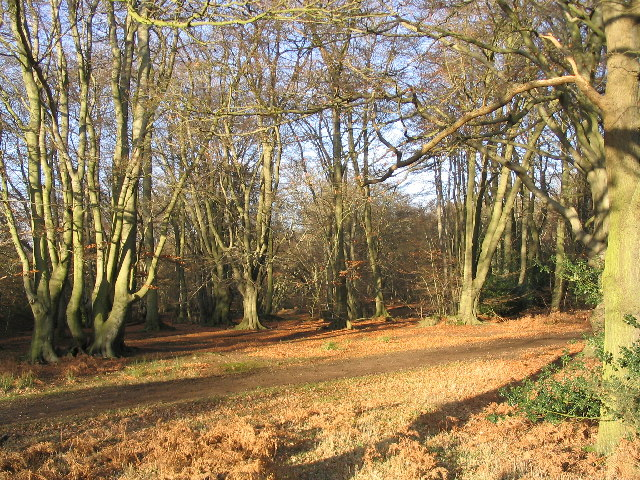 Hotels Near Epping Forest