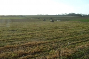 Farmland near Fluke Hall