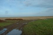 Pilling Marsh, near Fluke Hall