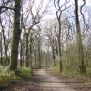 Woodland walk, Croxteth Country Park