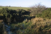 Ditch Field Sheep and gorse.