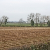 Maize stubble near Syston