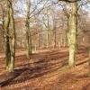 Beech Wood near Little Marlow
