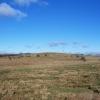 Winter Wetlands.