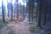 Redlands Wood
