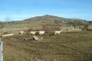 Farmland and Craig-y-garn