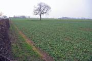 Farmland at SE838278