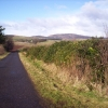 Road to Fern with Rhododendron Hedges