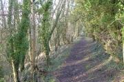 Adcombe Wood
