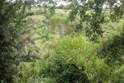Plemstall farmland