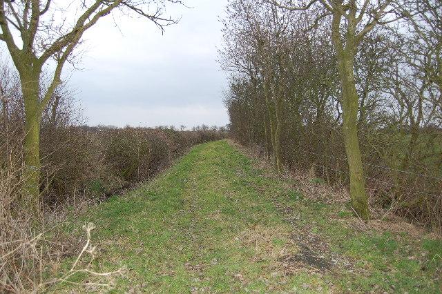 Old lane near Bottoms Farm