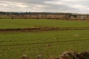 Farmland bordered by dry stone dyke and barbed wire.