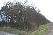 Wood at SE736313