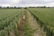 The Hedon to Preston footpath