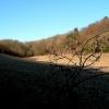 Sweeping fields near Wigginton
