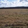 Grassland and Harcombe Wood