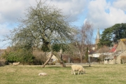 green and church, Bradpole
