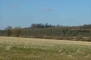 Mollington Woods