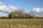Field and Wood, Bielby