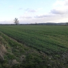 Field Hedge Boundary