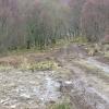Track to Loch Eishort