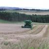Harvest 2004
