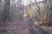 Buckholt Wood