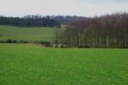 Woods and farmland