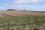 Farmland east of Chalgrove