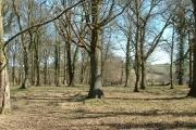 Newhouse Wood near Garway