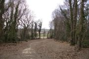 Jack O`Borehams Wood  Nr Ninfield East Sussex