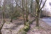 Woodland near Line Riggs