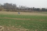 Fields SW of Michelmersh