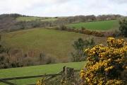 Hillside below Penpell Farm