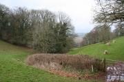 Tolland: wood above Gaulden Manor