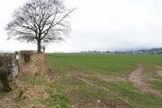 Field by Crieffvechter