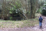 Pool in Westhide Wood