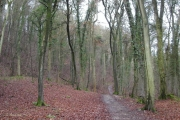 Cotswold Way path woodland