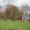Hedgerows, Downs Villa