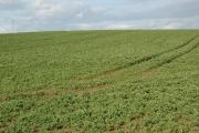 Open Field