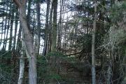 Longton Wood