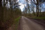 Haugham Pasture Wood