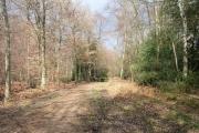Hodgemoor Wood
