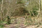 Wharton's Wood
