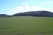 Gwaenysgor fields