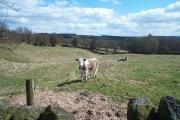 Littlemoor Wood Farm