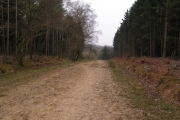Track through the great wood, Battle