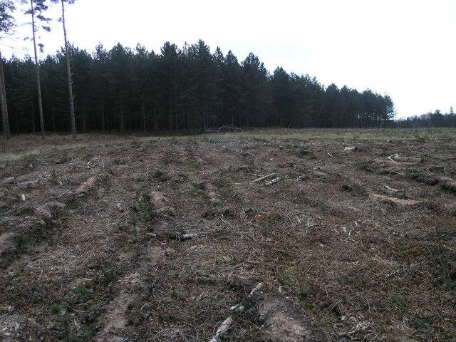 Charcoal Plantation