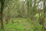 Langford Budville: edge of CoramÂ's Wood