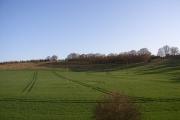 Farmland near Brightwell